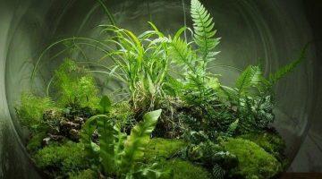Self-Sustaining Ecosystems